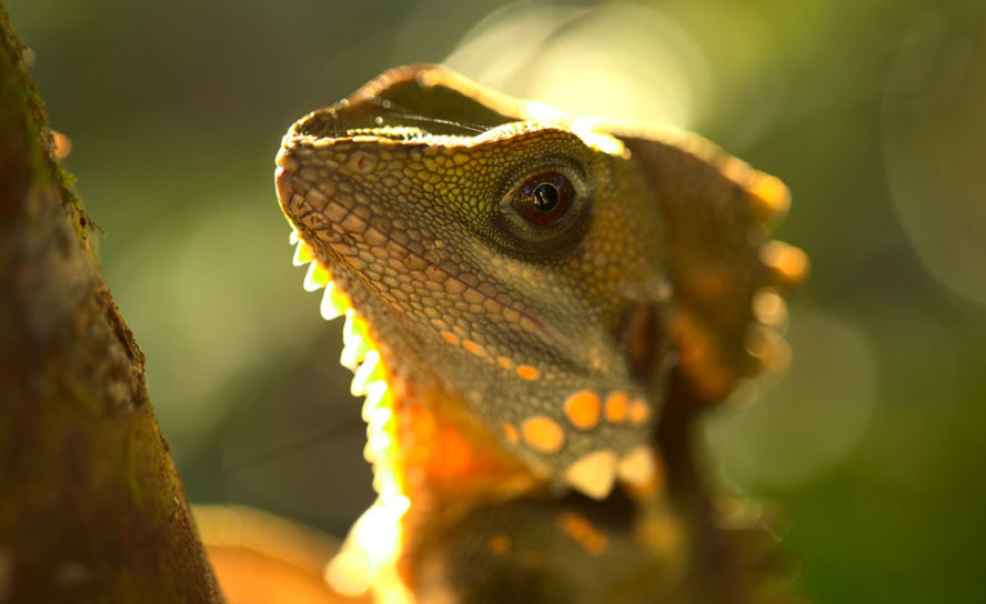 Lizard venom may contain clues to treating blood clots